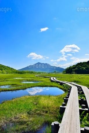 尾瀬ヶ原 池塘と木道に燧ヶ岳の写真素材 [FYI02093644]