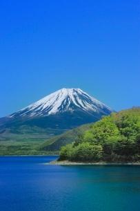新緑の本栖湖と富士山の写真素材 [FYI02093678]