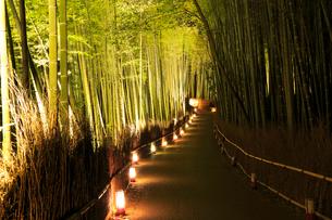 京都・嵐山花灯路 竹林の小径の写真素材 [FYI02093736]