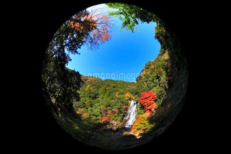 荒滝とカエデの紅葉の写真素材 [FYI02093753]