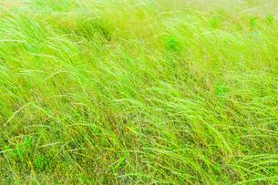 緑の草原の写真素材 [FYI02093920]
