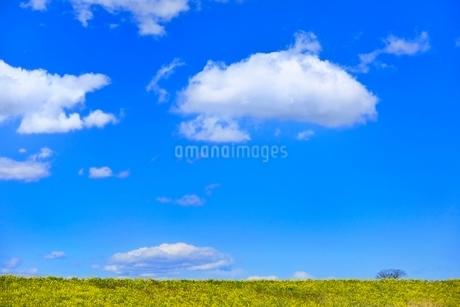雲と青空にナノハナ咲く土手の写真素材 [FYI02094105]