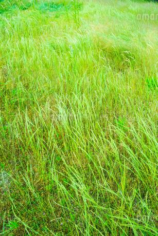 緑の草原の写真素材 [FYI02094113]