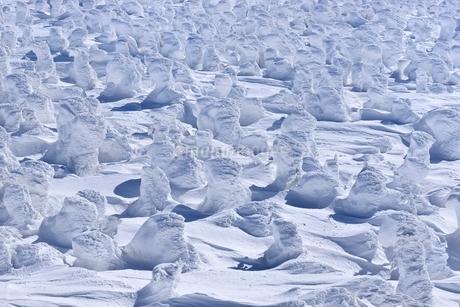 蔵王 地蔵山の樹氷の写真素材 [FYI02094184]