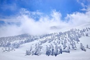 蔵王の地蔵山の樹氷原の写真素材 [FYI02094201]