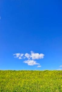 雲と青空にナノハナ咲く土手の写真素材 [FYI02094218]
