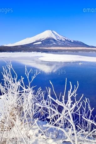 霧氷の山中湖と逆さ富士の写真素材 [FYI02094247]