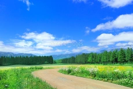 草原の道とナノハナに山並みの写真素材 [FYI02094476]