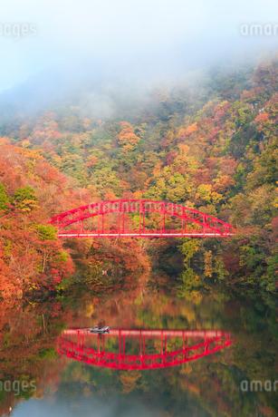 帝釈峡 朝霧かかる紅葉の神龍湖の写真素材 [FYI02094514]