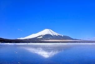 氷結の山中湖と逆さ富士の写真素材 [FYI02094521]