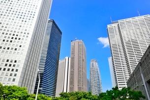 新緑の街路樹と新宿副都心高層ビル群の写真素材 [FYI02094571]