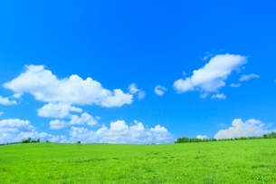 美瑛 緑の牧草の丘と雲の写真素材 [FYI02094596]