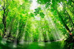 新緑の奥入瀬渓流に光芒の写真素材 [FYI02094600]