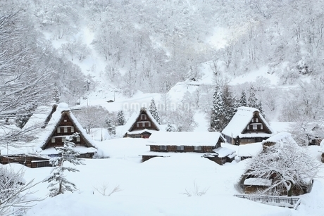 五箇山 雪の菅沼合掌造り集落の写真素材 [FYI02094664]