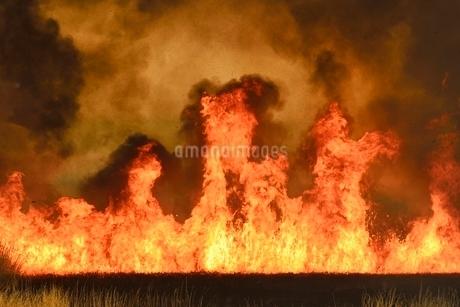 渡良瀬遊水地の野焼き 炎と煙の写真素材 [FYI02094702]