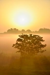荒川河川敷の霧と朝日に木立の写真素材 [FYI02094733]