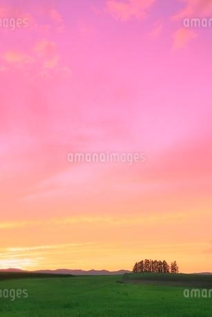 美瑛 新栄の丘と夕焼けの写真素材 [FYI02094757]