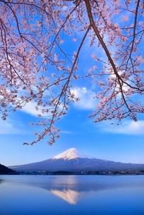 河口湖の桜と逆さ富士の写真素材 [FYI02094807]