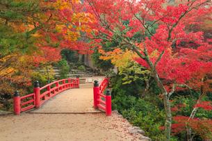 宮島 紅葉谷公園の紅葉の写真素材 [FYI02094830]