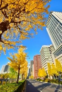 日比谷通り 紅葉のイチョウ並木と丸の内ビル群の写真素材 [FYI02094864]