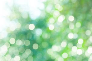 新緑の草に付いた水滴の写真素材 [FYI02094948]