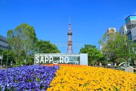 札幌,新緑の大通公園とさっぽろテレビ塔の写真素材 [FYI02094969]