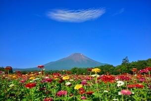 花の都公園 富士山と百日草の花畑に雲の写真素材 [FYI02095015]