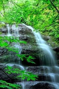 新緑の奥入瀬渓流・九段の滝の写真素材 [FYI02095049]