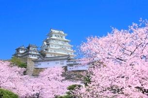 サクラと姫路城の写真素材 [FYI02095056]
