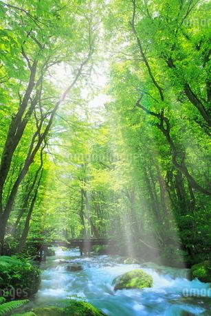 新緑の奥入瀬渓流に光芒の写真素材 [FYI02095093]