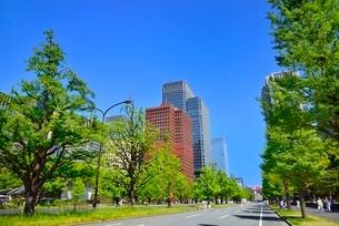 行幸通り 新緑のイチョウ並木に丸の内ビル群の写真素材 [FYI02095100]