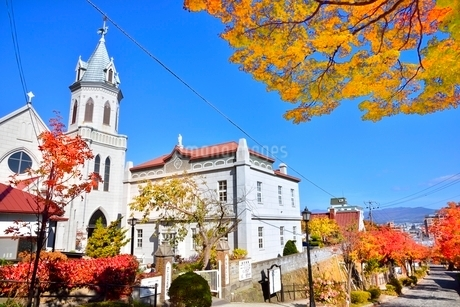 秋の函館 カトリック元町教会と紅葉の街路樹の写真素材 [FYI02095106]
