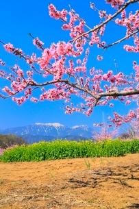 新府桃源郷 桃の花と南アルプス・鳳凰三山の写真素材 [FYI02095121]