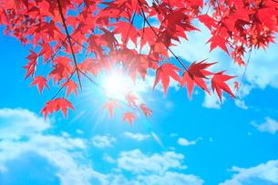 紅葉のモミジと太陽に光芒の写真素材 [FYI02095124]