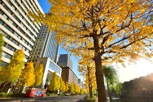 日比谷通り 紅葉のイチョウ並木と丸の内ビル群の写真素材 [FYI02095158]