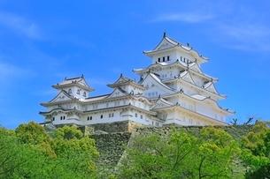 新緑の姫路城の写真素材 [FYI02095165]