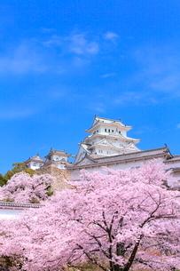 サクラと姫路城の写真素材 [FYI02095222]