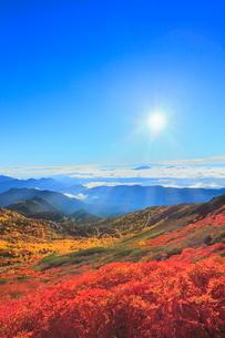 乗鞍エコーライン ナナカマドの紅葉と雲海に光芒の写真素材 [FYI02095227]