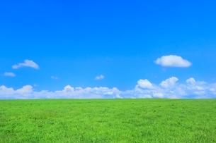 美瑛 緑の牧草の丘と雲の写真素材 [FYI02095248]
