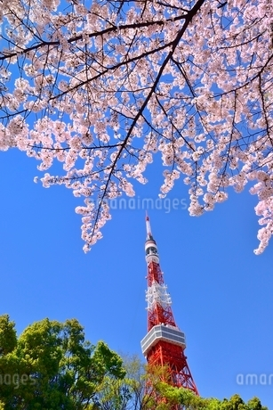 東京タワーと桜の写真素材 [FYI02095254]