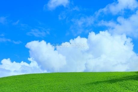 美瑛 緑の丘と入道雲の写真素材 [FYI02095264]