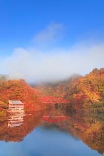 帝釈峡 朝霧かかる紅葉の神龍湖の写真素材 [FYI02095296]