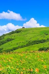 霧ケ峰高原に咲くニッコウキスゲの花の群落と車山の写真素材 [FYI02095335]