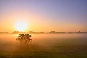 荒川河川敷の霧と朝日に木立の写真素材 [FYI02095345]