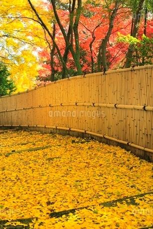 京都・洛西 紅葉の金蔵寺の写真素材 [FYI02095470]