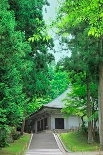 新緑の中尊寺金色堂の写真素材 [FYI02095528]