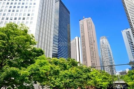 新緑の街路樹と新宿副都心高層ビル群の写真素材 [FYI02095556]