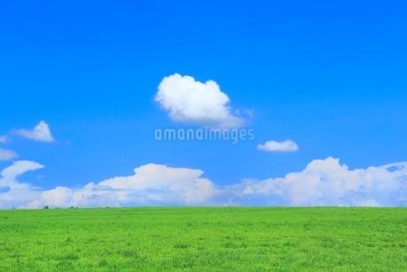 美瑛 緑の牧草の丘と雲の写真素材 [FYI02095618]