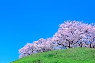 丘のサクラと青空の写真素材 [FYI02095620]