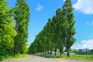 北海道大学 平成ポプラ並木の写真素材 [FYI02095660]